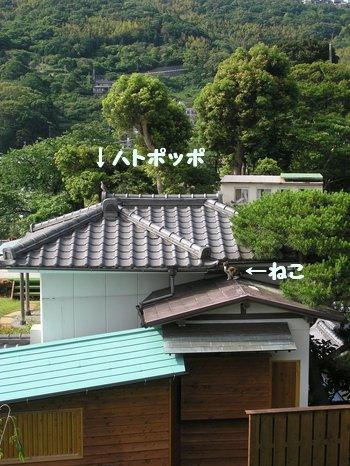 20080601_001